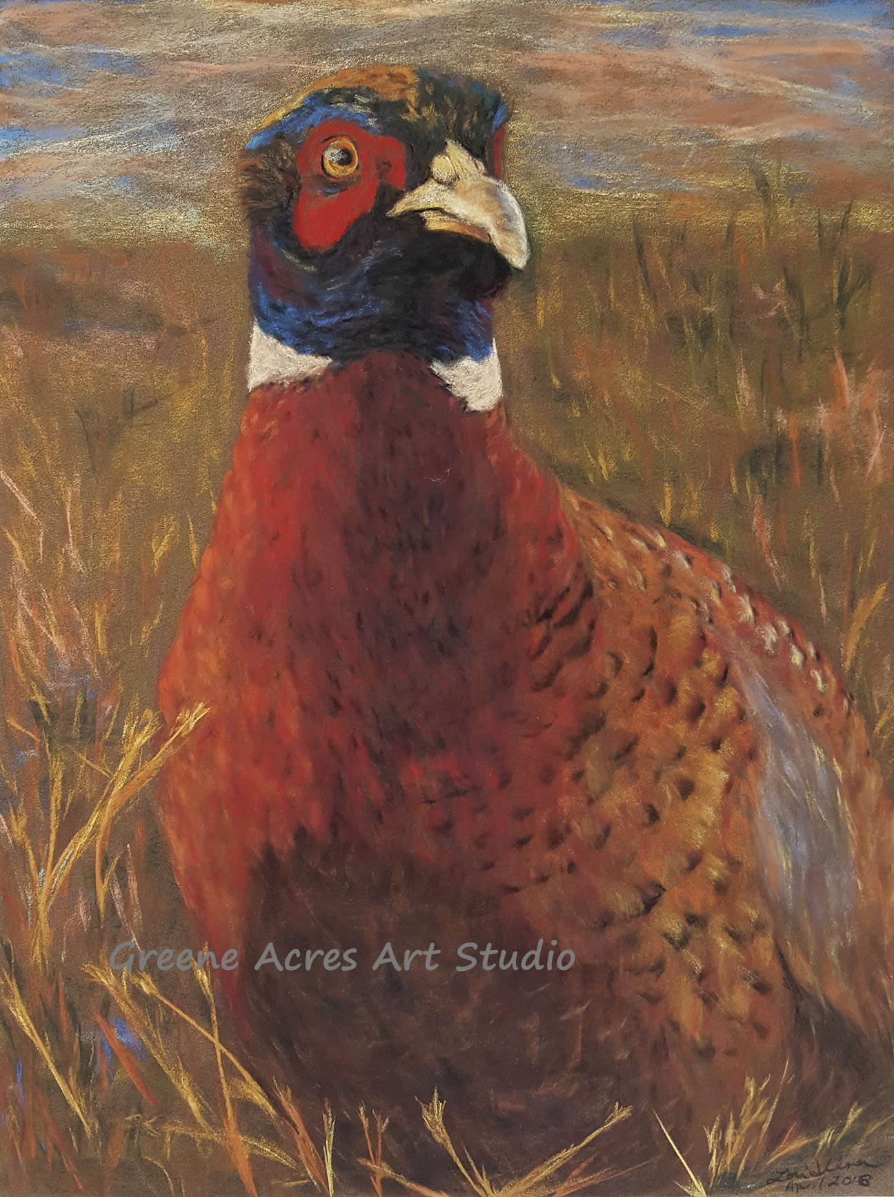 A Pheasant's Direct Gaze