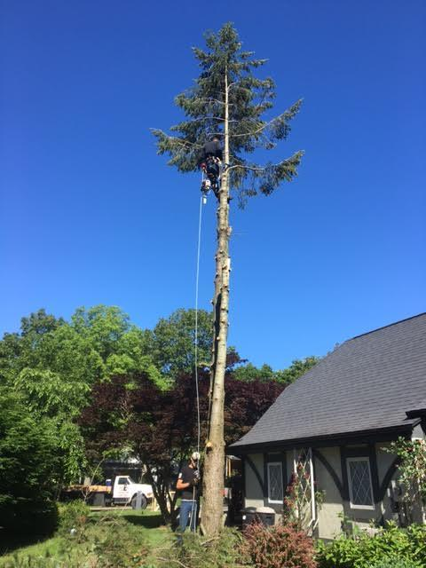 Arrow Tree Service removes tree limbs hanging over a house in Temperance, Michigan.