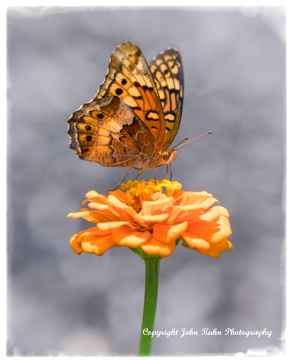 On Orange Zinnia Soft