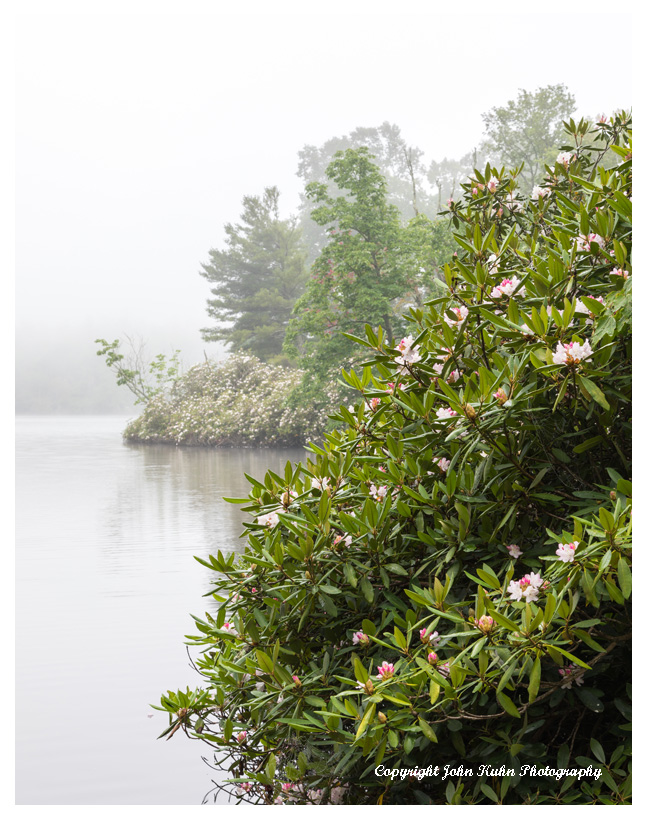 Price Lake Mountain Laurel