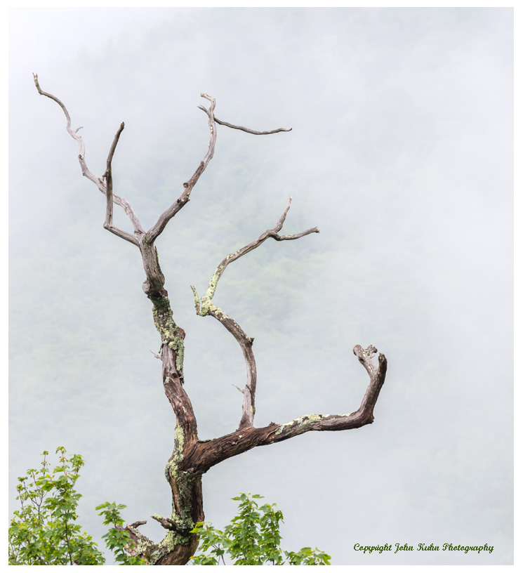 Lone Tree with Foggy Mountain
