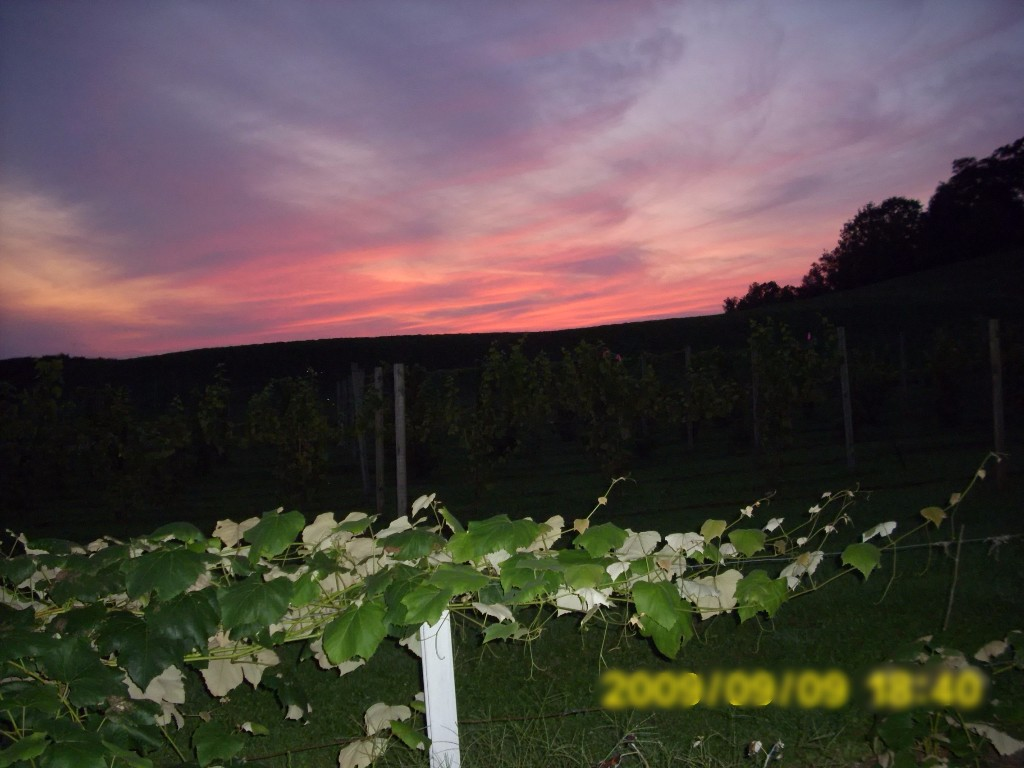 Savor Vineyards and Wines Sunset 001