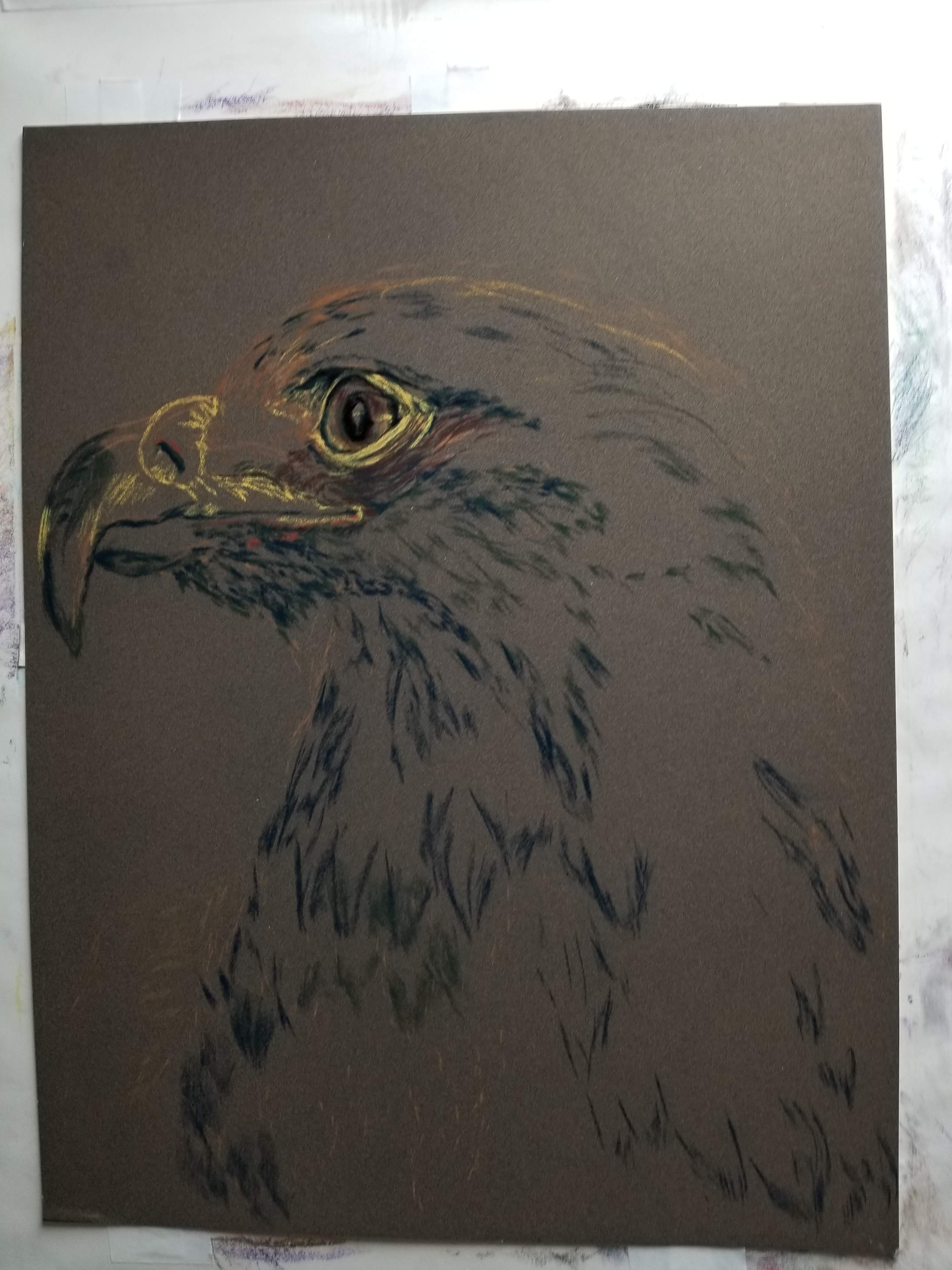 A Hawk's Gaze {initial draft}