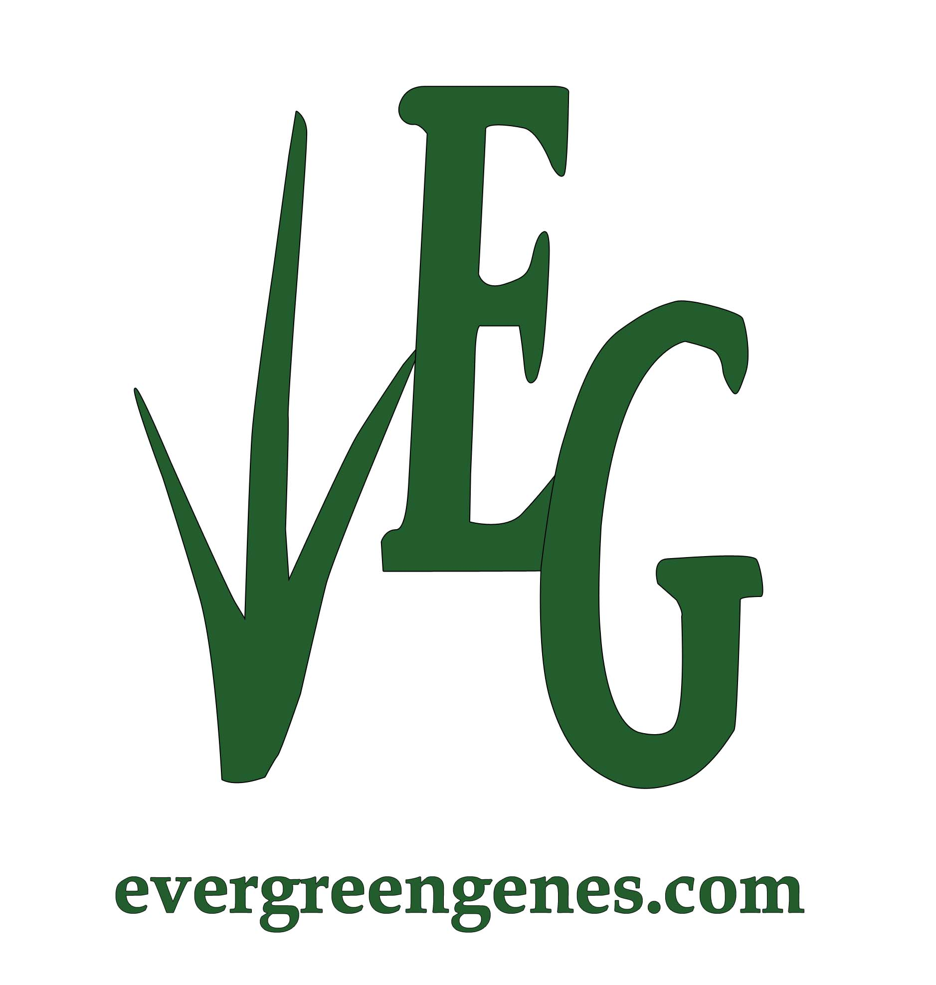 evergreen genes landscaping, garden center, landscape contractor