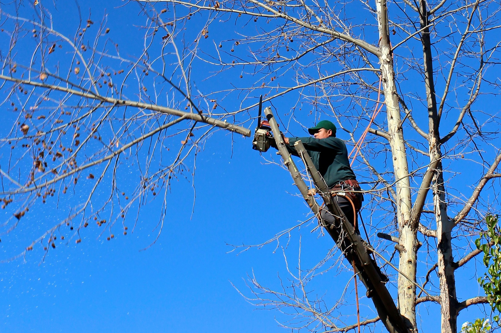 Arrow Tree Service starts the tree removal process by cutting down limbs in Tecumseh, Michigan.