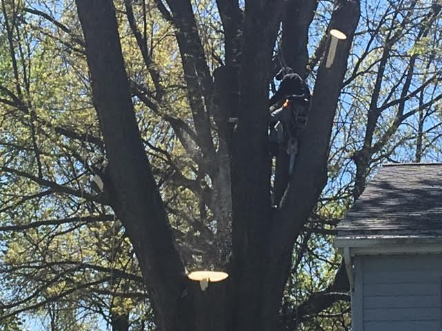 Arrow Tree Service cuts down limbs near a house in Deerfield, Michigan.