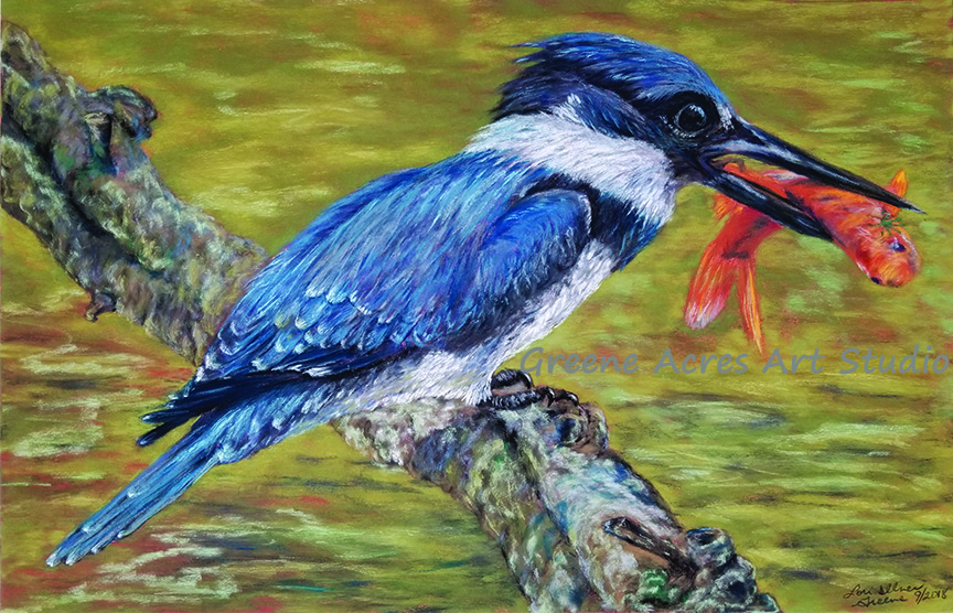 pastel on pastel card 19.5x12.5 $580 framed  (reference image  Rob Weir, nature photographer)