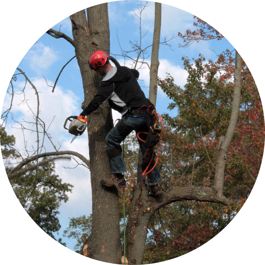 Tree service picpng