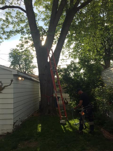 Arrow Tree Service cuts down a tree very close to a garage in Milan, Michigan.