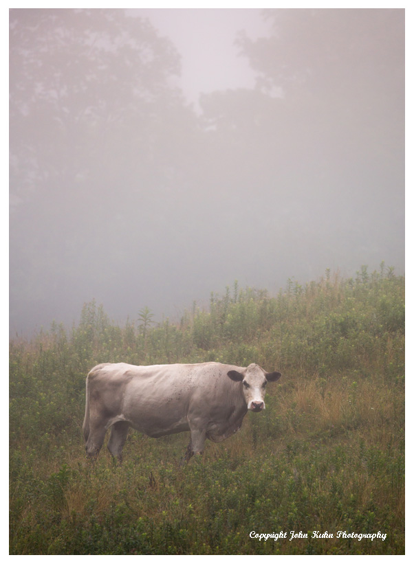 Grazing in the Fog