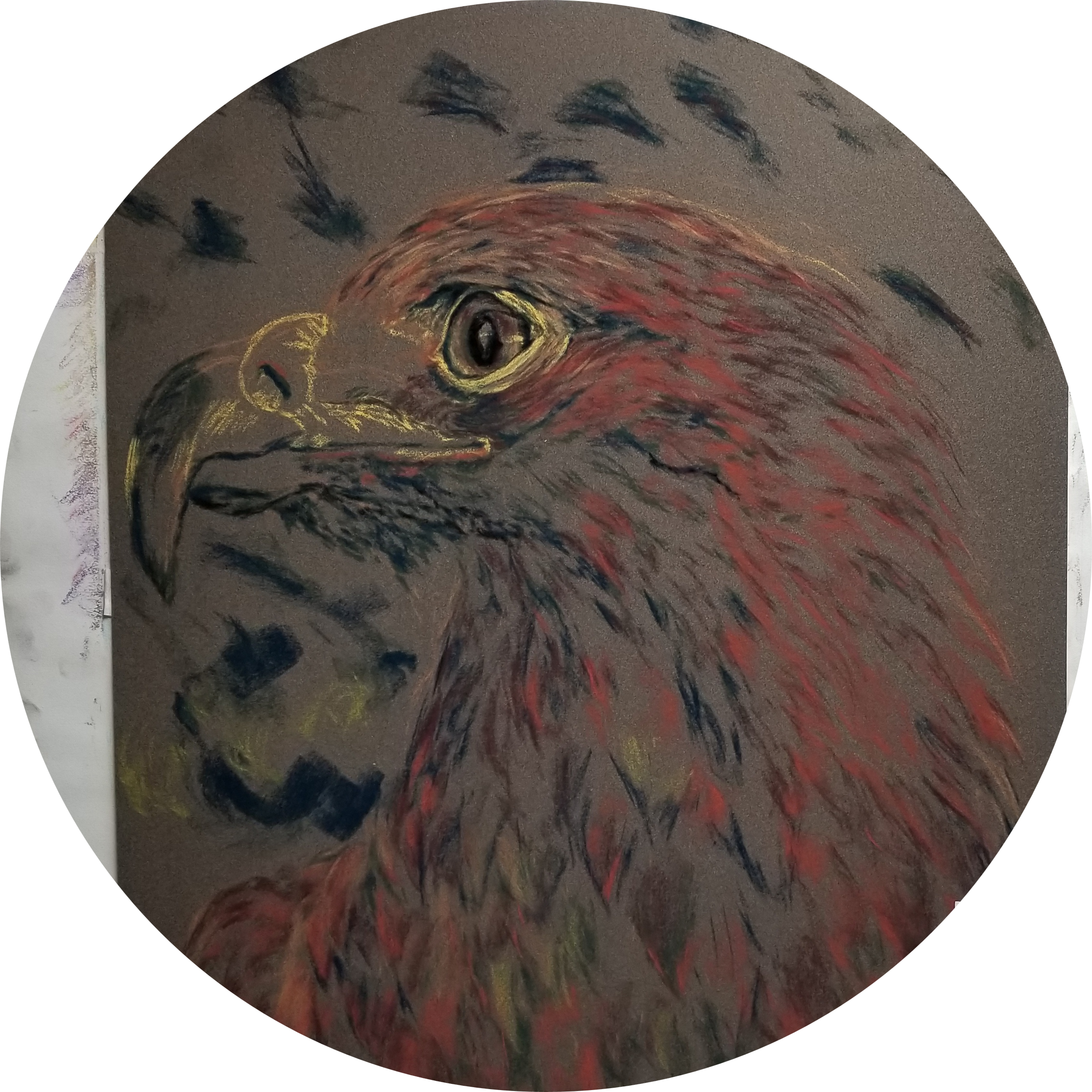 A Hawk's Gaze {in progress}