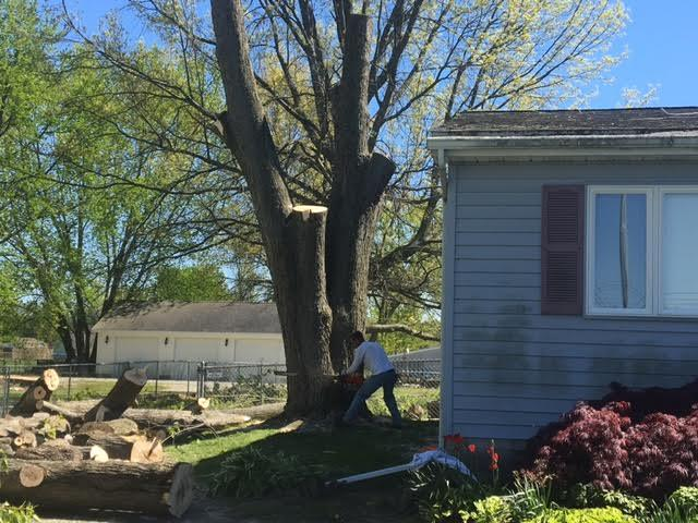 Arrow Tree Service cuts down a tree in chunks near a home in Deerfield, Michigan.