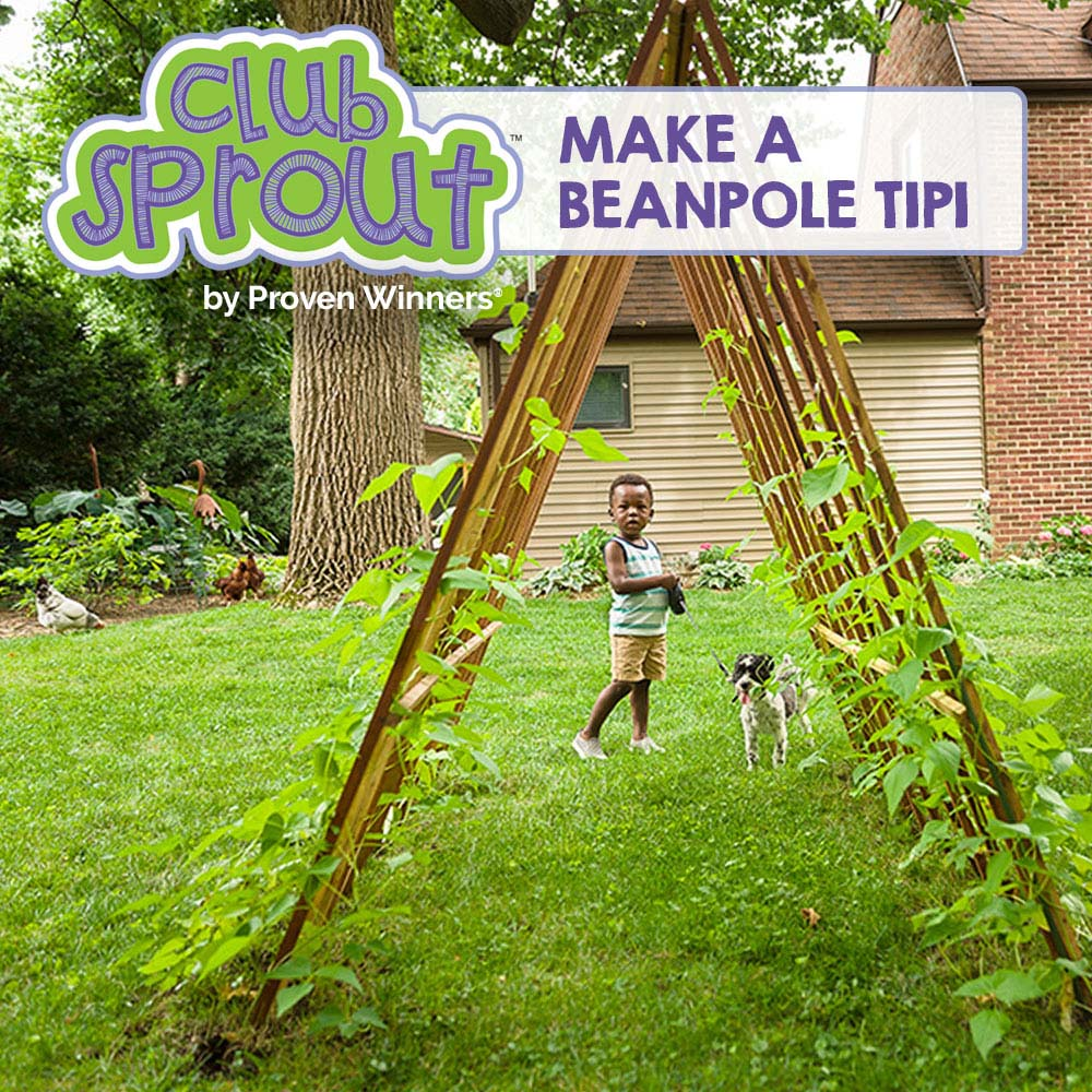 Make a Beanpole Tipi